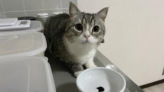 夜中に台所で盗み食いしようとしてる猫を見つけました…