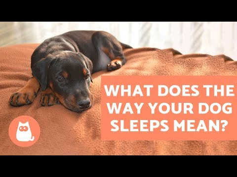 Dogs' Sleeping Position: What does it Mean?