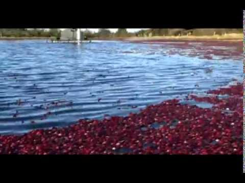 Cranberry Beater -Oregon Cranberry Growers Association