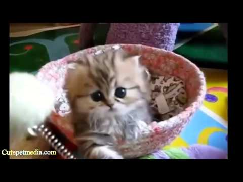 CUTENESS OVERLOAD ★ Animal Cuteness Overload Compilation (HD) [Funny Pets]