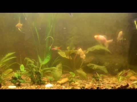 0 - Як чистити скло в акваріумі?
