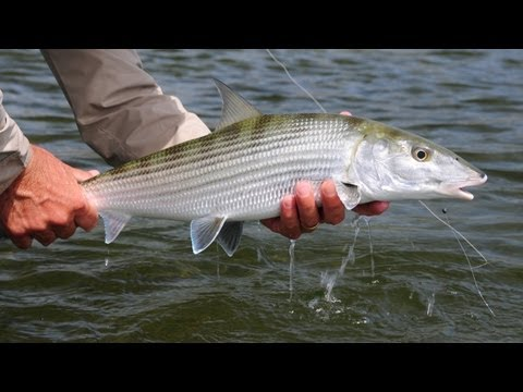 SALTWATER FISHING TIPS: Bonefish