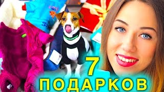 видео Что подарить собаке?