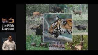 What do machine learning and high performance computing have to do with big cats in the wild?