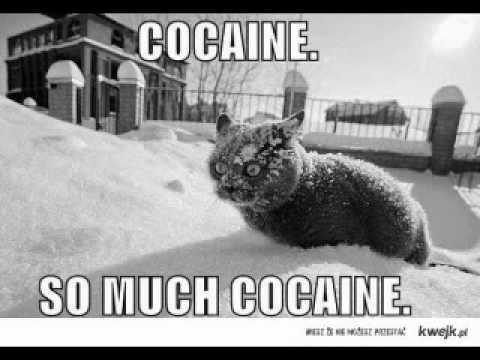 Картинки по запросу кот cocaine so much cocaine