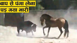 जब गलत जगह उंगली करना पड़ गया महंगा ।। When animals messed with wrong opponent