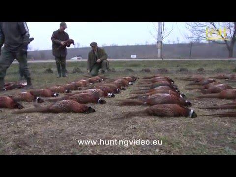 Pheasant Hunting In Hungary Pélpuszta (HD).mpg