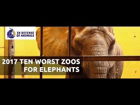 2017 Ten Worst Zoos For Elephants In North America