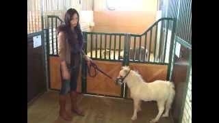 Денники для лошадей манеж для тренинга