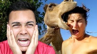 Download REACTING TO THE SCARIEST ANIMALS Mp3 and Videos