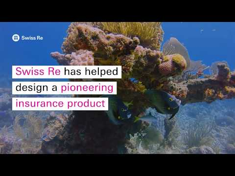 Designing A New Type Of Insurance To Protect The Coral Reefs