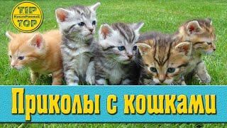 Смешные коты / Приколы с кошками / Видео про котов / funny cats /