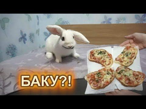 БАКУ вселился В КРОЛИКА Лялю! МИНИ ПИЦЦЫ! Горячие бутерброды за 5 минут от Непеты
