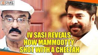 iv sasi reveals how mammootty shot with a cheetah filmyfocus com