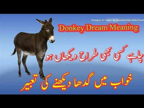Donkey Dream Meaning || Khwab Mein Gadha Dekhna || Khwabon Ki Tabeer in  Urdu || interpretation