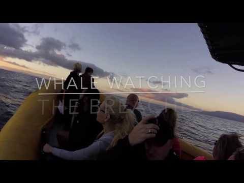 Whale Watching in Lahaina, Hawaii