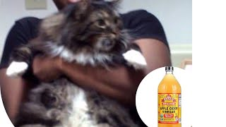 Apple Cider Vinegar Can Heal Your Dog Or Cat