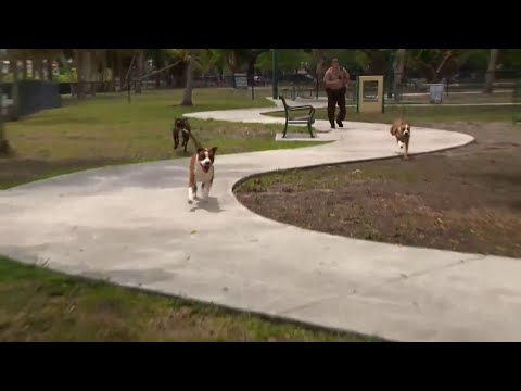 Miami-Dade shelter dogs join police at Tropical Park in hopes of finding forever homes