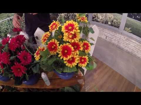 Roberta's Gardens - Arizona Sun Blanket Flower