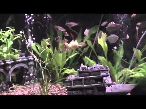 Mini R/C Submarine in my Fish Tank