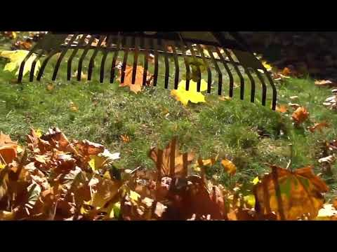 Autumn leafs by Peter John Bosse 2017