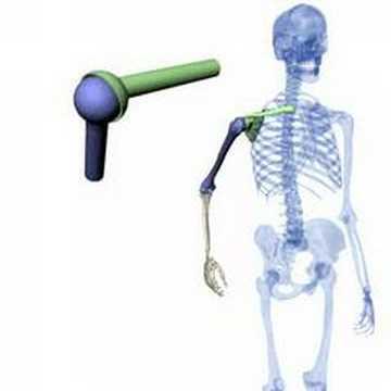 Anatomie, Teil3 - Kugelgelenk - YouTube