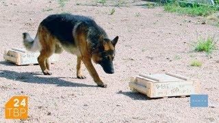 Как дрессируют служебных собак в полиции