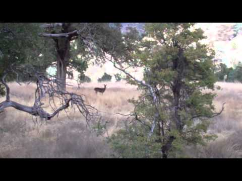 Deer At Cache Creek