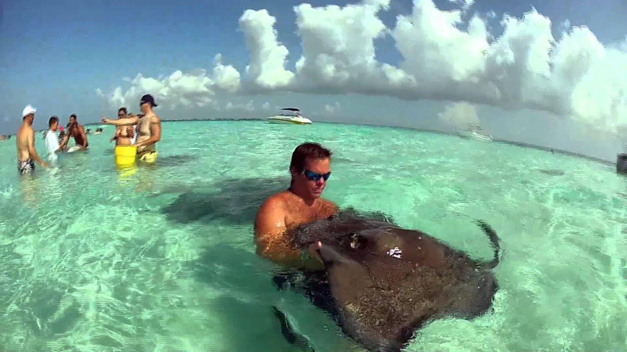 Grand Cayman S Stingray City Sandbar