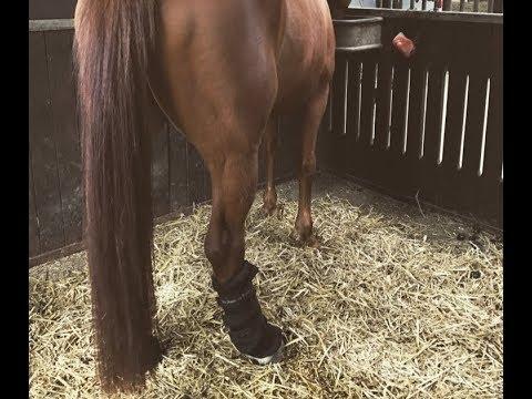 mehrere farben moderne Techniken Einkaufen Meine Erfahrung mit den Back on Track Stallgamaschen   AQL Equestrian
