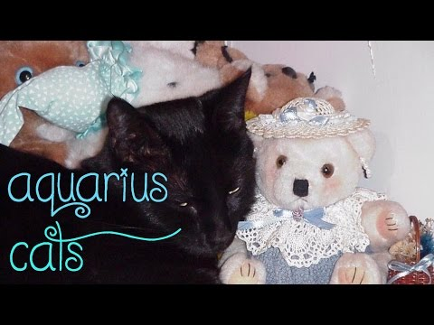 Aquarius cats