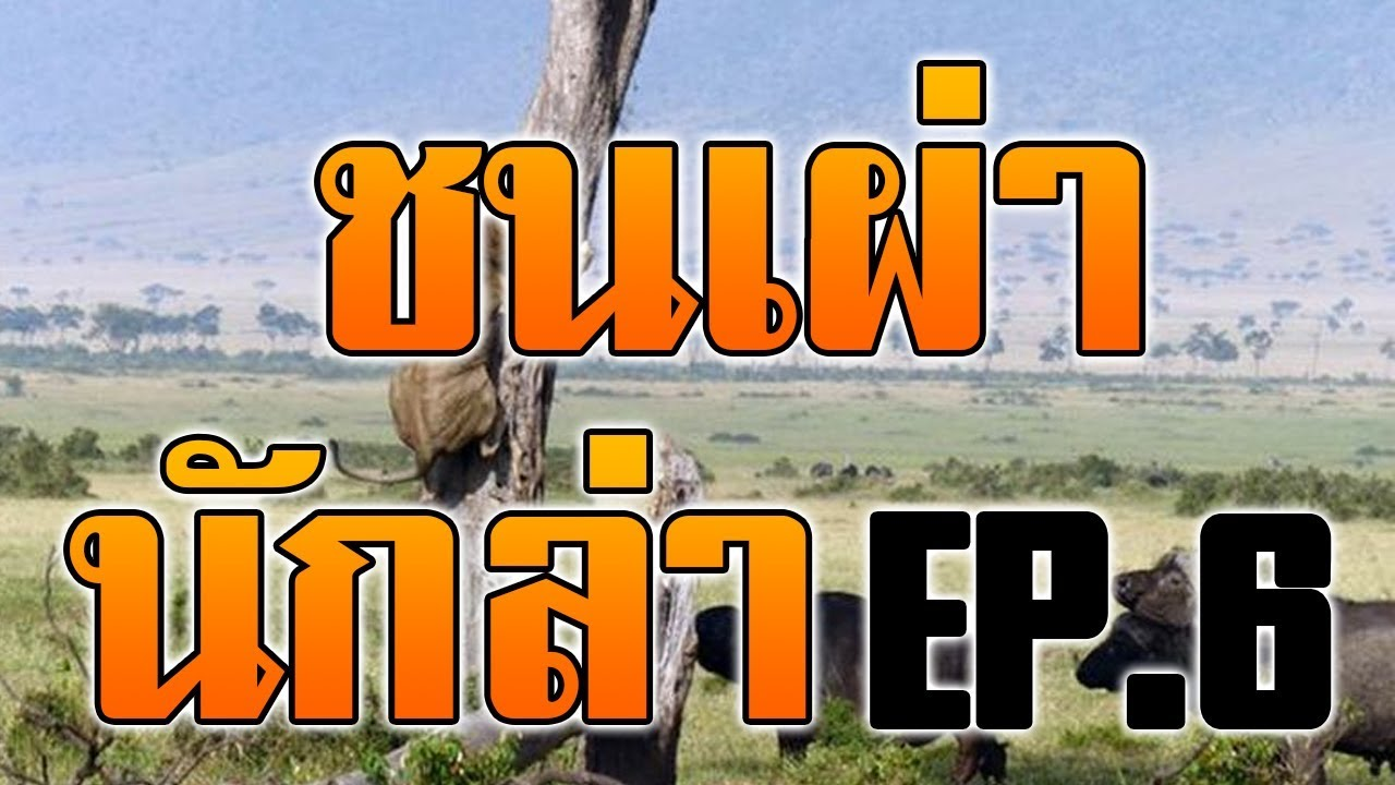 #สารคดี ชนเผ่านักล่า : เอาชีวิตรอดแบบคนป่า ล่าสัตว์ หากินแบบคนป่า EP.6
