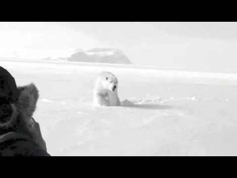 Polar Bear Encounter in Nunavut