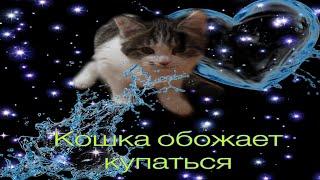Шок 🤯 Моя кошка любит купаться  . А ваша кошка /кот любит купаться ???