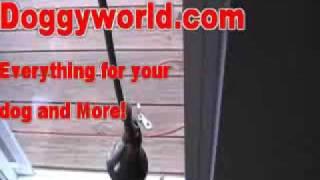 HOW TO HOUSE TRAIN YOUR DOG IN 3 DAYS!  DOGGYWORLD.COM  http://www.doggyworld.com/