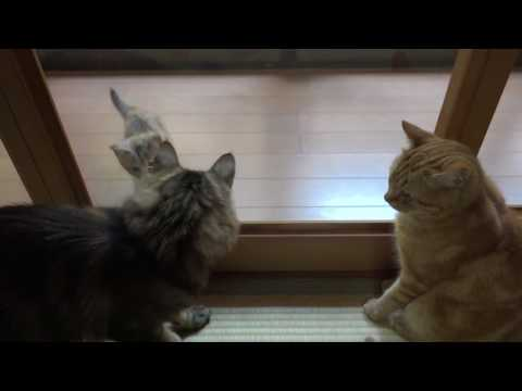 Cats & Kittens Cats Peer Round To Check Kitten. Cat Catching The Appearance Of A Kitten