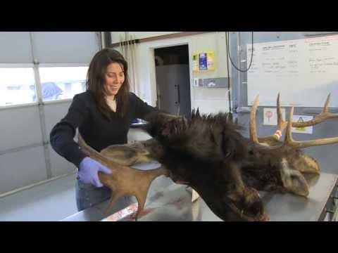 Hunt 'em Up: Hunters Can Help Scientist To Understand Wildlife Diseases