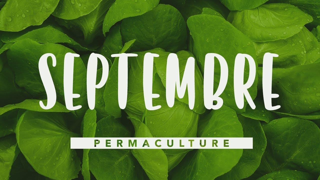 Quoi Mettre Au Potager En Septembre que faire dans son jardin permaculture en septembre ? # permaculture
