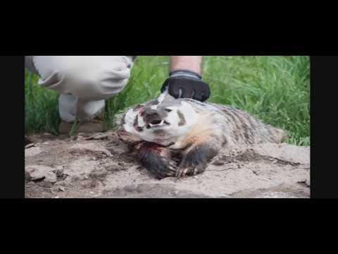 Oregon Rat Hunting 2018