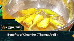 Health benefits of Oleander flower to treat diabetes