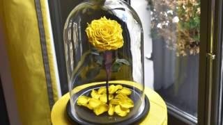Долговечная роза в стеклянной колбе из сказки Красавица и Чудовище