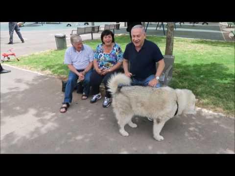 ראש הממשלה נתניהו עם הכלבה קאיה ברחובות ירושלים