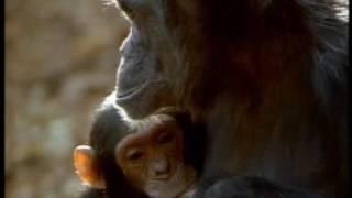 National Geographic   Yavru Hayvanlar Ve  Öyküleri