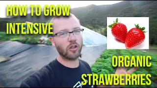 HOW TO: Grow Intensive Organic Strawberries