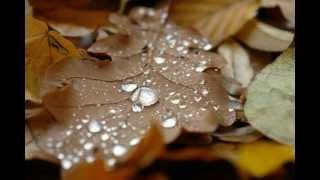 Мелодия дождя - Бетховен thumbnail