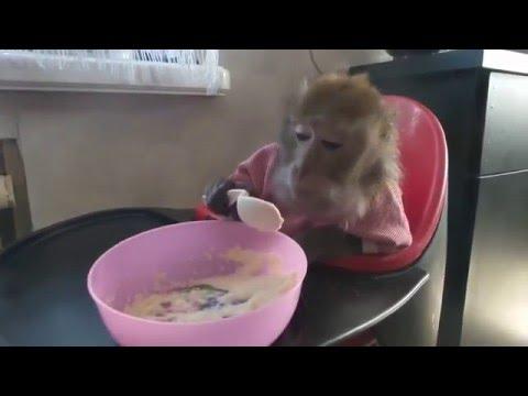 Милая обезьянка кушает кашку!