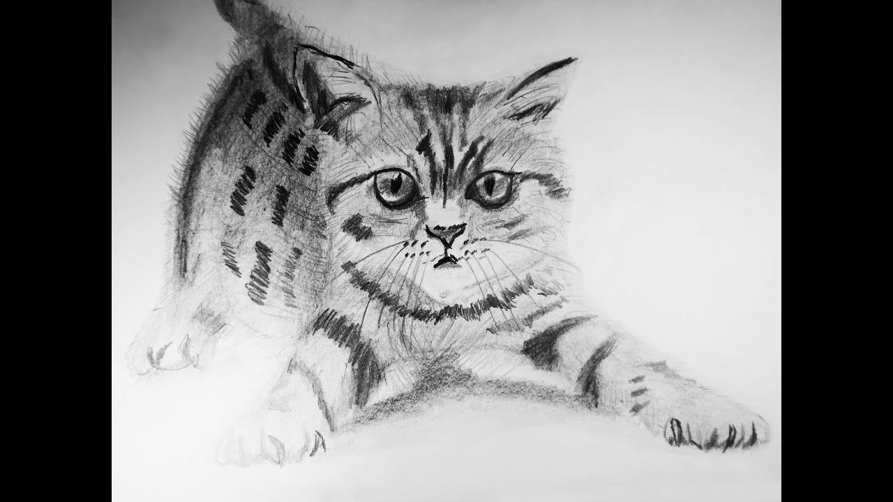 Dibujos Para Colorear Realistas: Cómo Dibujar Un Gato A Realista