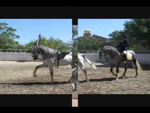 Jorge Contreras www.mchorsetraining.com