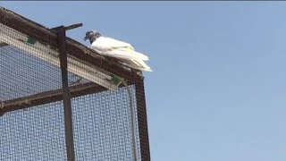 Dubai 6_Pigeons Landing 3:09pm 4:38pm 5:14pm 6:17pm 7:13pm 7:15pm |47°Temperature
