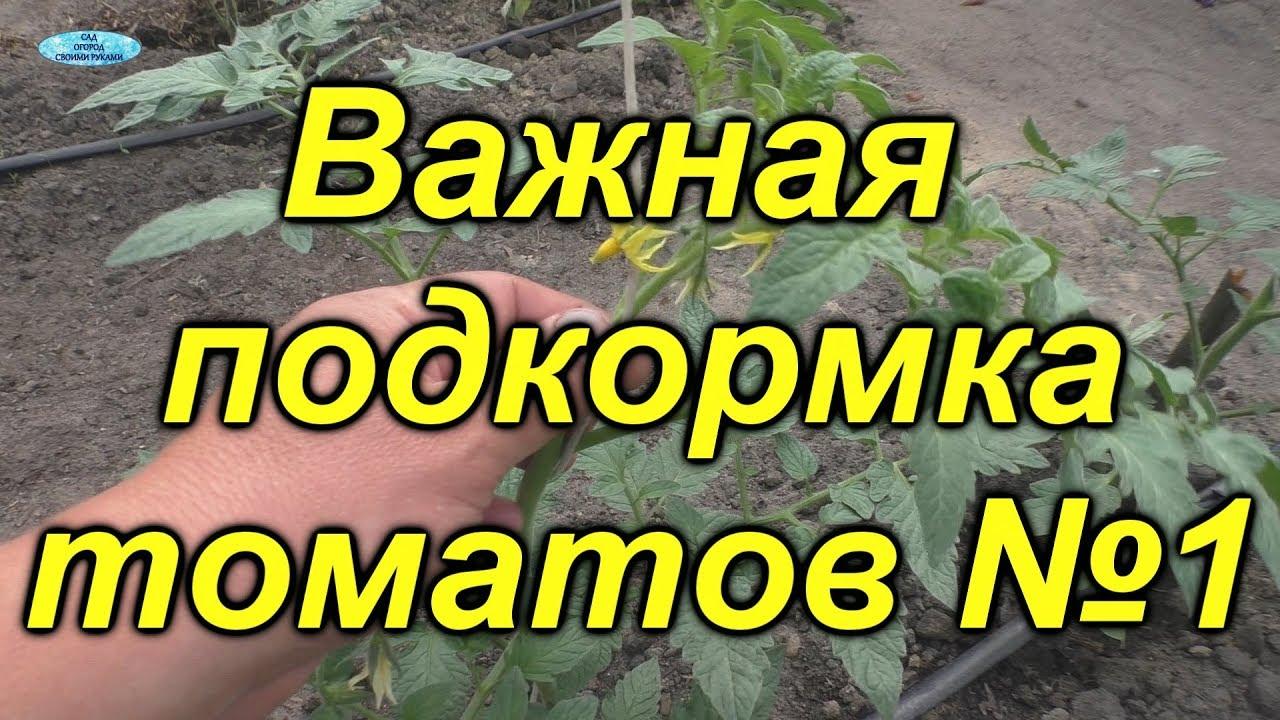 Чем подкормить томаты через 10 дней? Первая, очень важная подкормка.